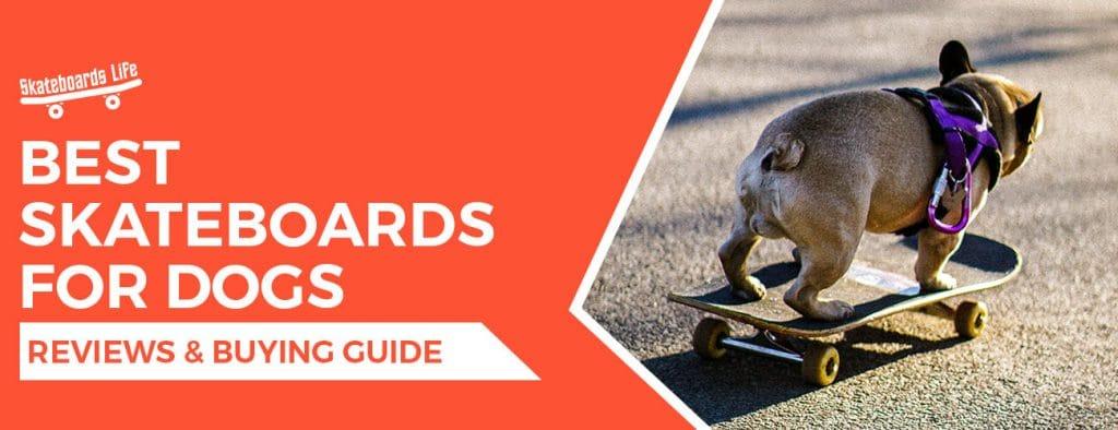 Best Skateboards For Dogs